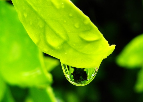 Picture of water drop on leaf
